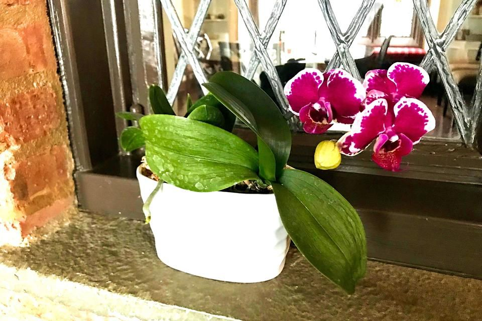 Finding Joy By Regrowing Orchids How to Get Your Orchid