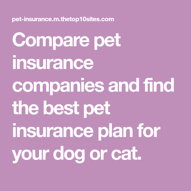 Compare pet insurance companies and find the best pet ...