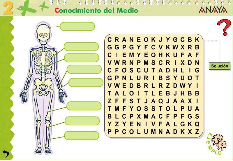 Resultado De Imagen Para Esqueleto De Sopa De Letras Esqueleto Humano Para Ninos Cuerpo Humano Para Ninos Huesos Del Cuerpo Humano