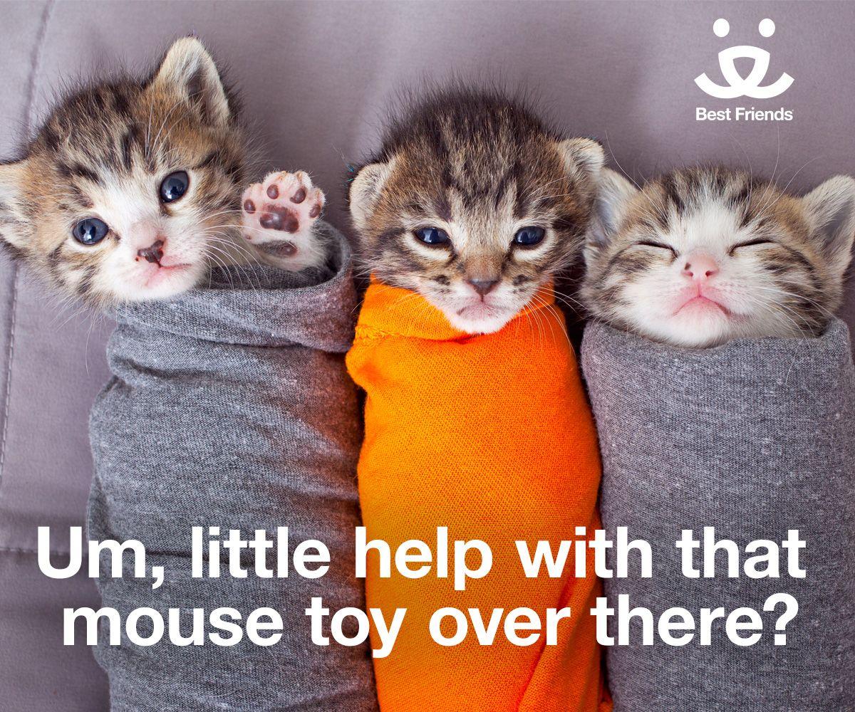 Orphaned Kitten Care And Feeding Kittens Cutest Baby Kittens Kittens