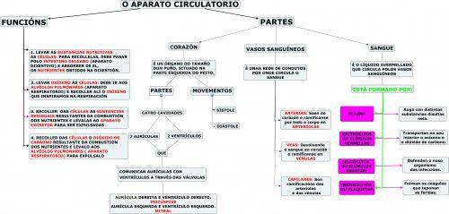 Sistema Circulatorio Sistema Circulatorio Mapa Conseptual Organos Del Sistema Respiratorio