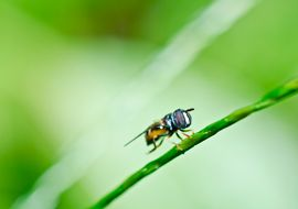 How Do I Get Rid of the Tiny Flies in My Kitchen? | Tiny ...