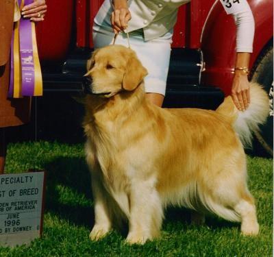 Ch Can Asterling S Wild Blue Yonder Dog Breeder Golden Dog