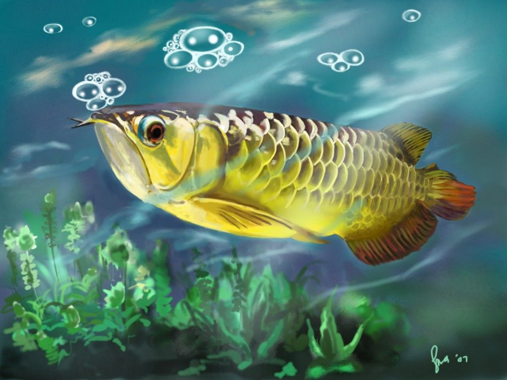 Fish Asian Arowana The Mythical Fish Asian Arowana Lukisan Ikan Alam