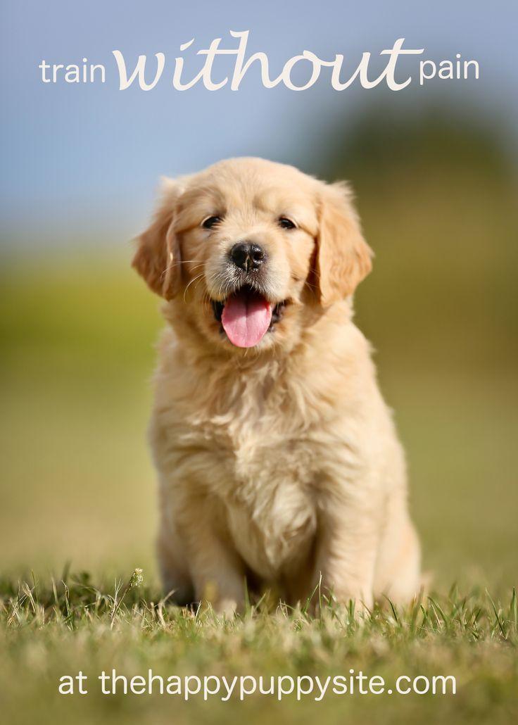 10 Top Dog Training Youtube Channels Dog Training Dog Training