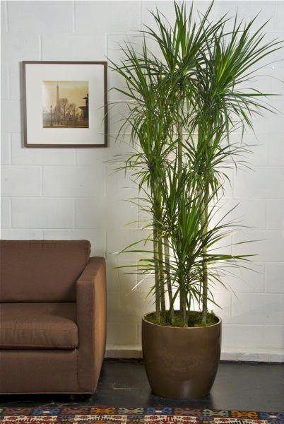 Inside Plants Living Room