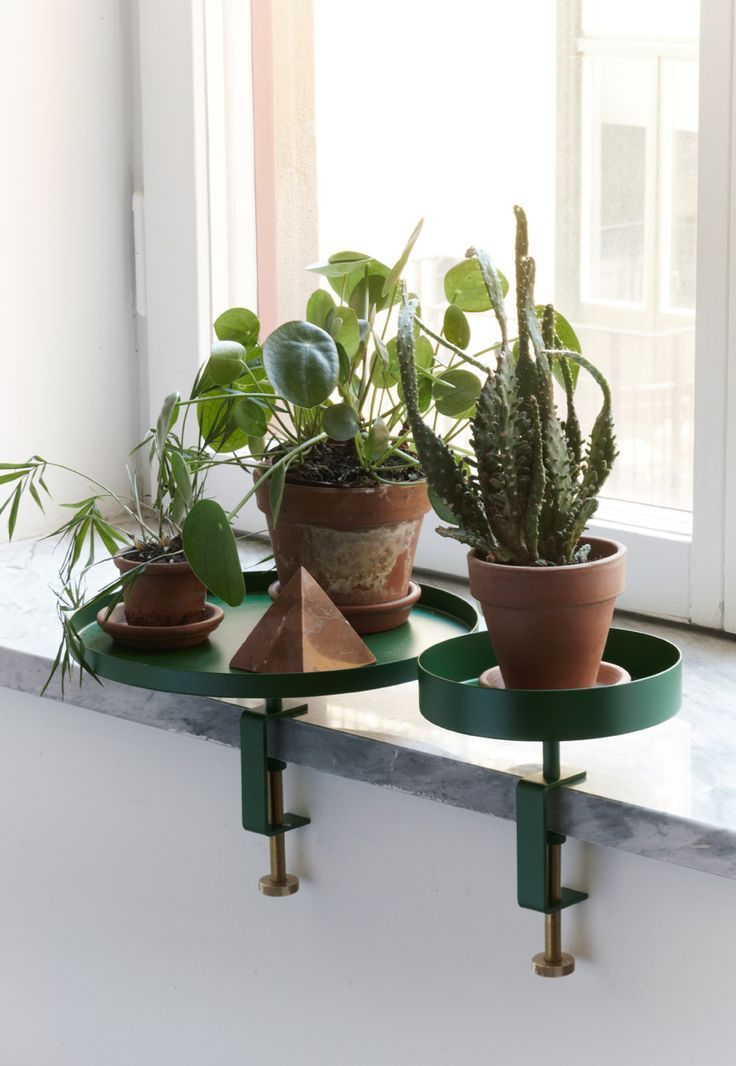The Amazing Clamp Tray By Navet Plants Garden Green Plants