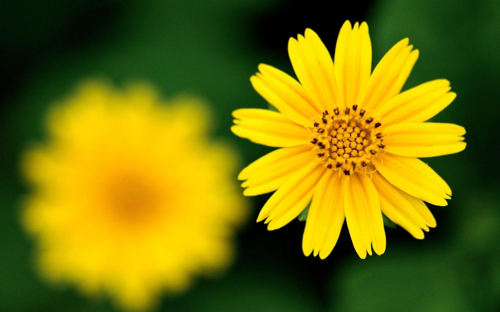 Скорби памяти, картинки с желтыми цветами