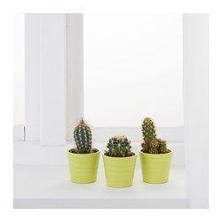 ikea cactaceae pflanze mit bertopf flat pinterest bert pfe pflanze und ikea. Black Bedroom Furniture Sets. Home Design Ideas