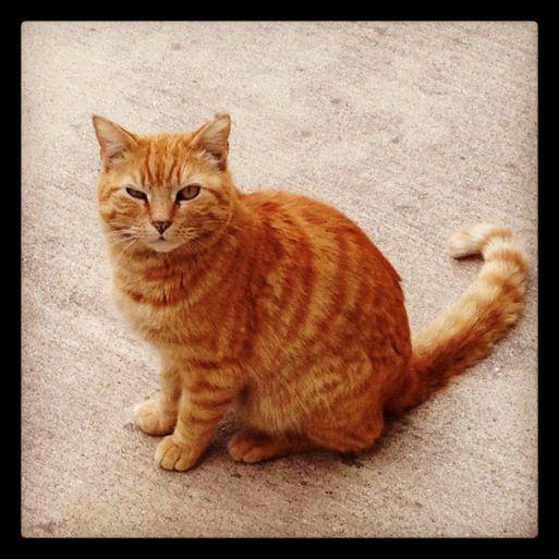 My orange tabby cat, Kitkat