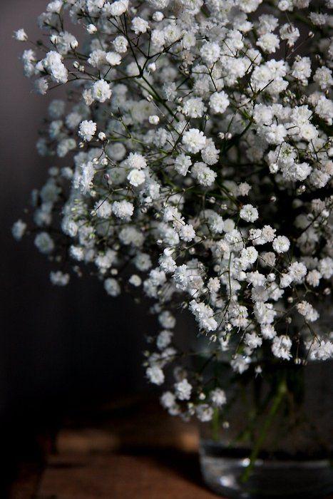 Baby S Breath White Flowers Beautiful Flowers Garden Flower Beds