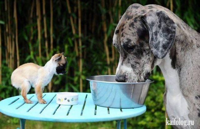 Прикольные и позитивные животные (40 фото) | Смешные фото ...
