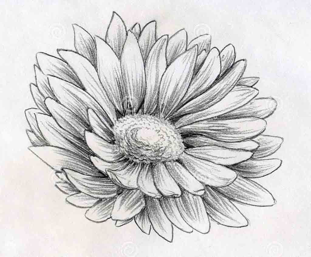 Draw Flowers With Pencil