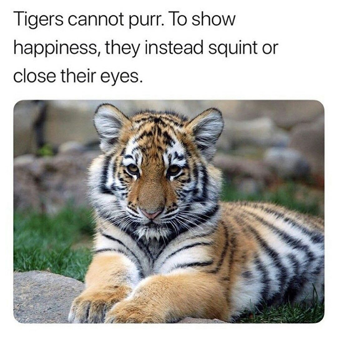 Pin by Rose on Animals Animal facts, Cat facts, Animals