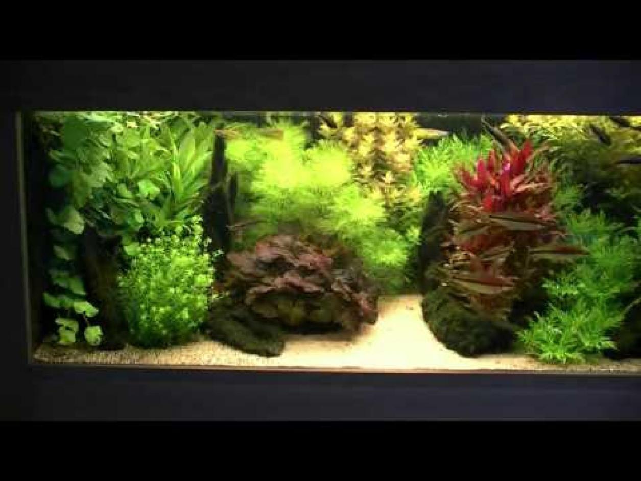 Freshwater fish tank youtube - Famous Dutch Style Aquarium Fish Tank Youtube
