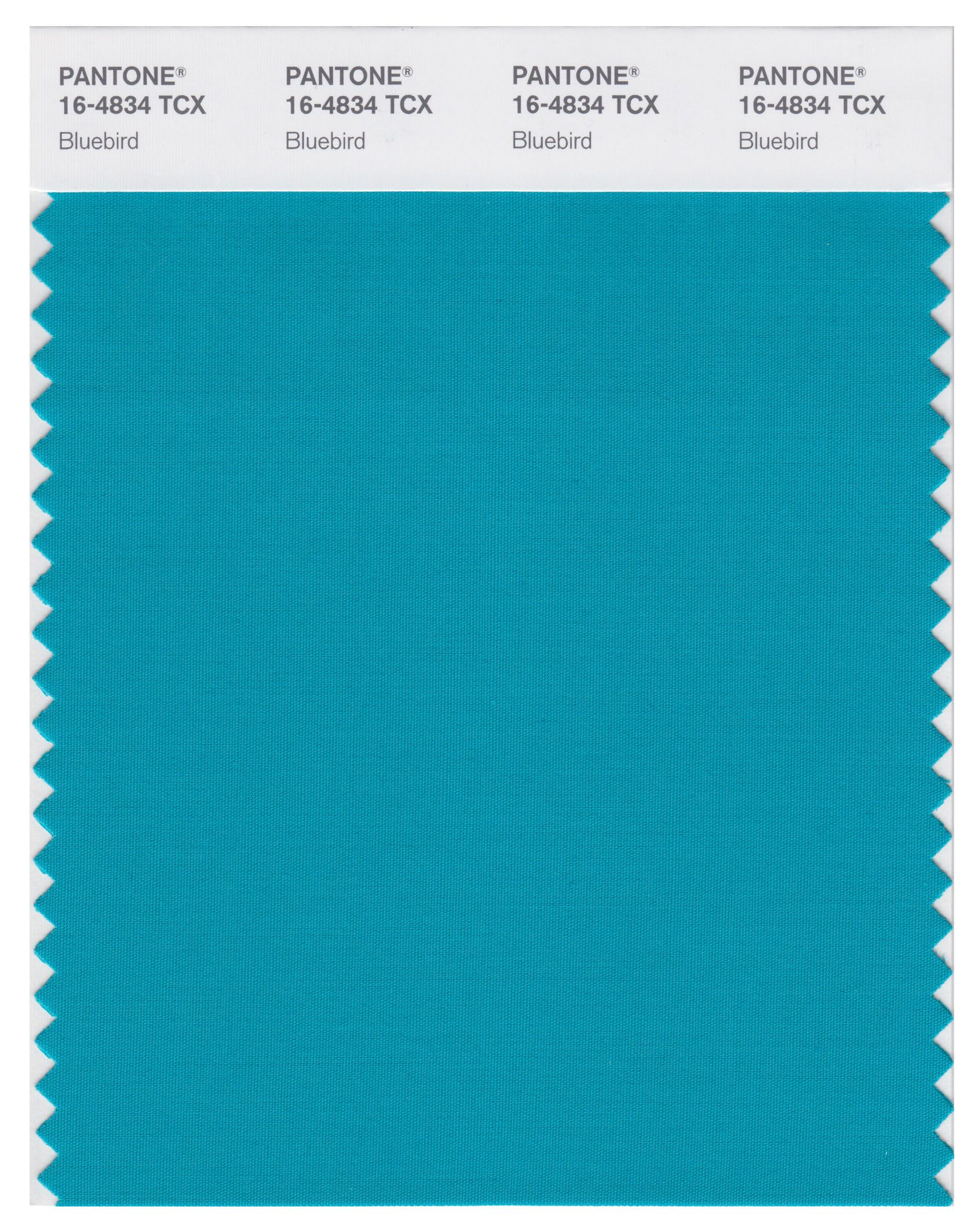 Pantone Smart 16 4834 Tcx Color Swatch Card Bluebird Magazine Cafe Nyc Usa
