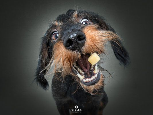 Photo of Doping for the heart: Christian Vielers pictures of dogs that sniff for treats …