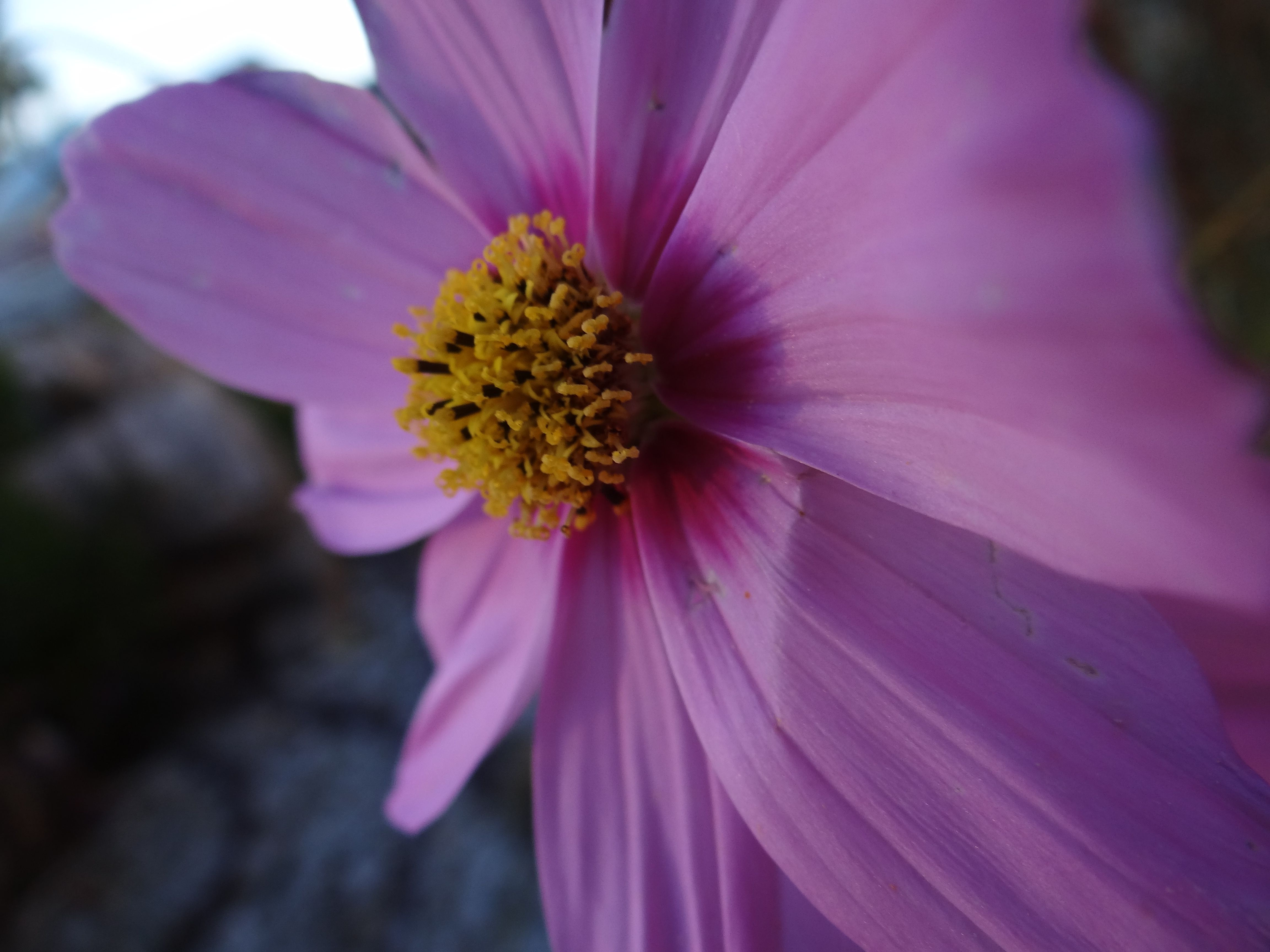 Side View of a Flower-Michaela Hawley