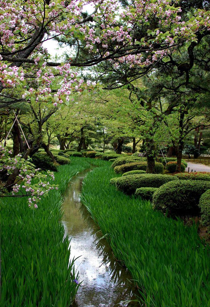 兼六園菊桜 Kenrokuen Kikusakura 日本庭園 庭作りのアイデア 景観設計