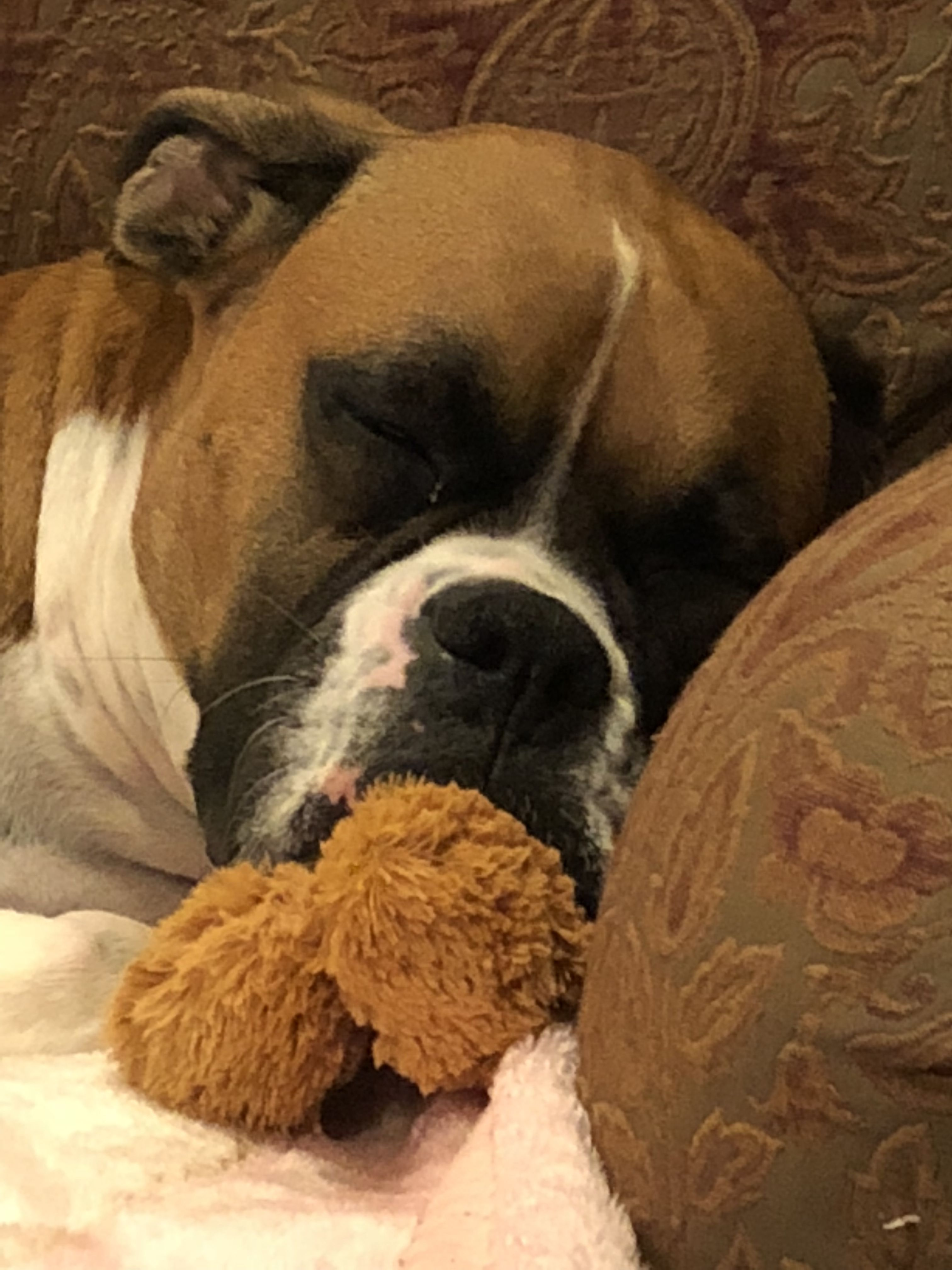 Pin By Julie Carlile On Boxer Dogs Boxer Dogs Boxer Love Dog Love