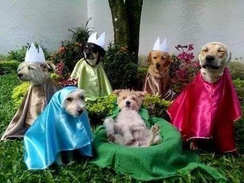 Pesebre Navideno Con Perritos Conquista A Todo Internet Perros Navidad Perros Animales Navidenos