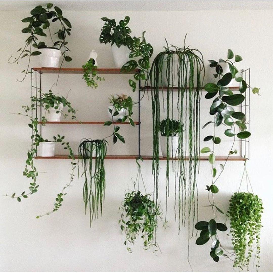 House Plants For Shady Rooms: Great Shelf Setup! 😍🌿 Phot
