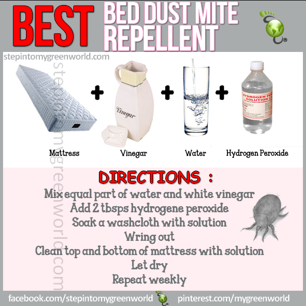 DIY easy steps on how to control bed dust mites Dust