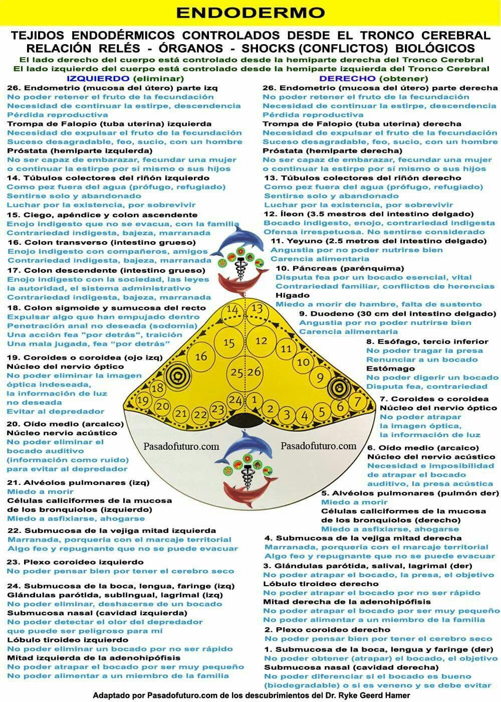 Pin de beatriz en Anatomía | Pinterest | Bioneuroemocion, Tabla y ...