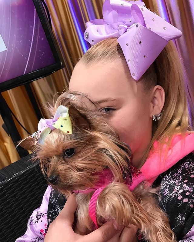 Why Is My Dog So Cute All About Jojo Siwa Old And New