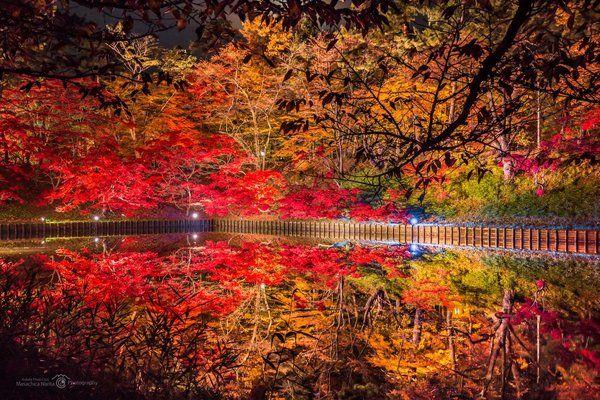 弘前公園の夜 その妖しさに魅了される のtwitter検索結果 Yahoo リアルタイム検索 紅葉 景色 紅葉 風景 風景