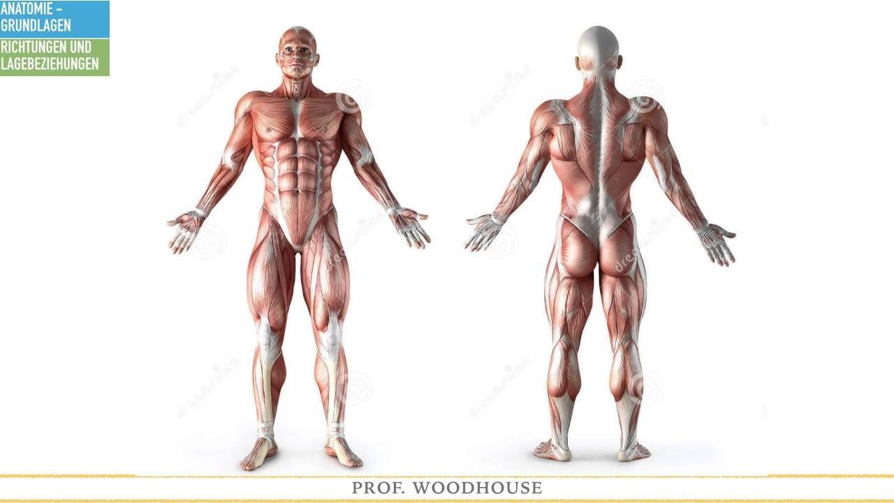 Anatomie - Grundlagen: Teil 1 | Anatomie | Pinterest | Alternative ...