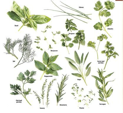 Medicinal Herb Identification Pictures Google Search Plant