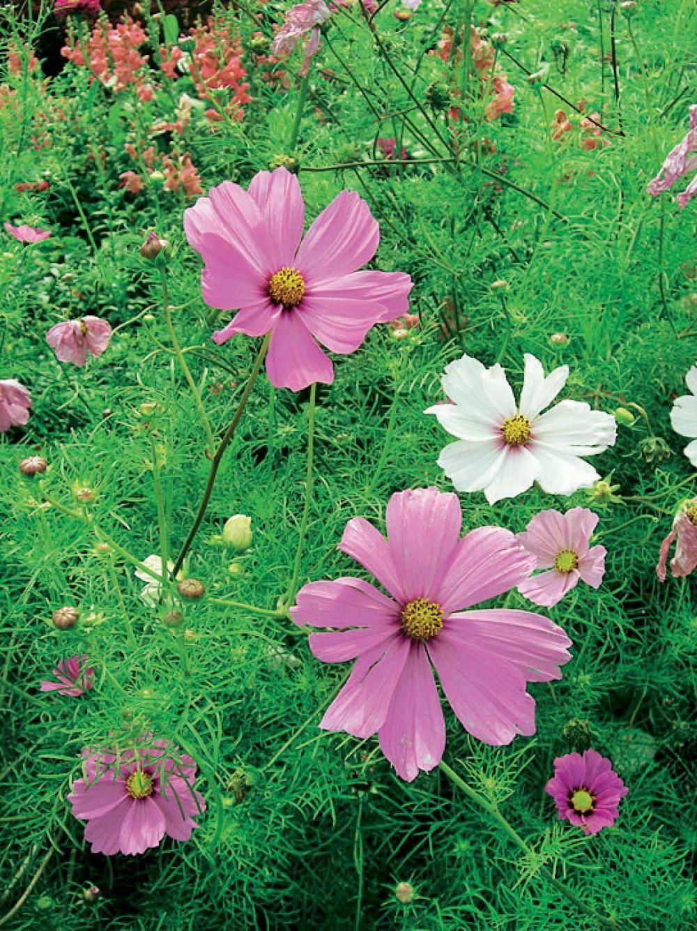 Schnittblumen Aus Dem Garten Schnittblumen Garten Sommerblumen
