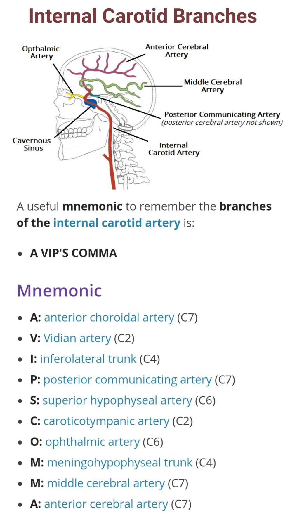 Branches Of Internal Carotid Artery Arteries Veins