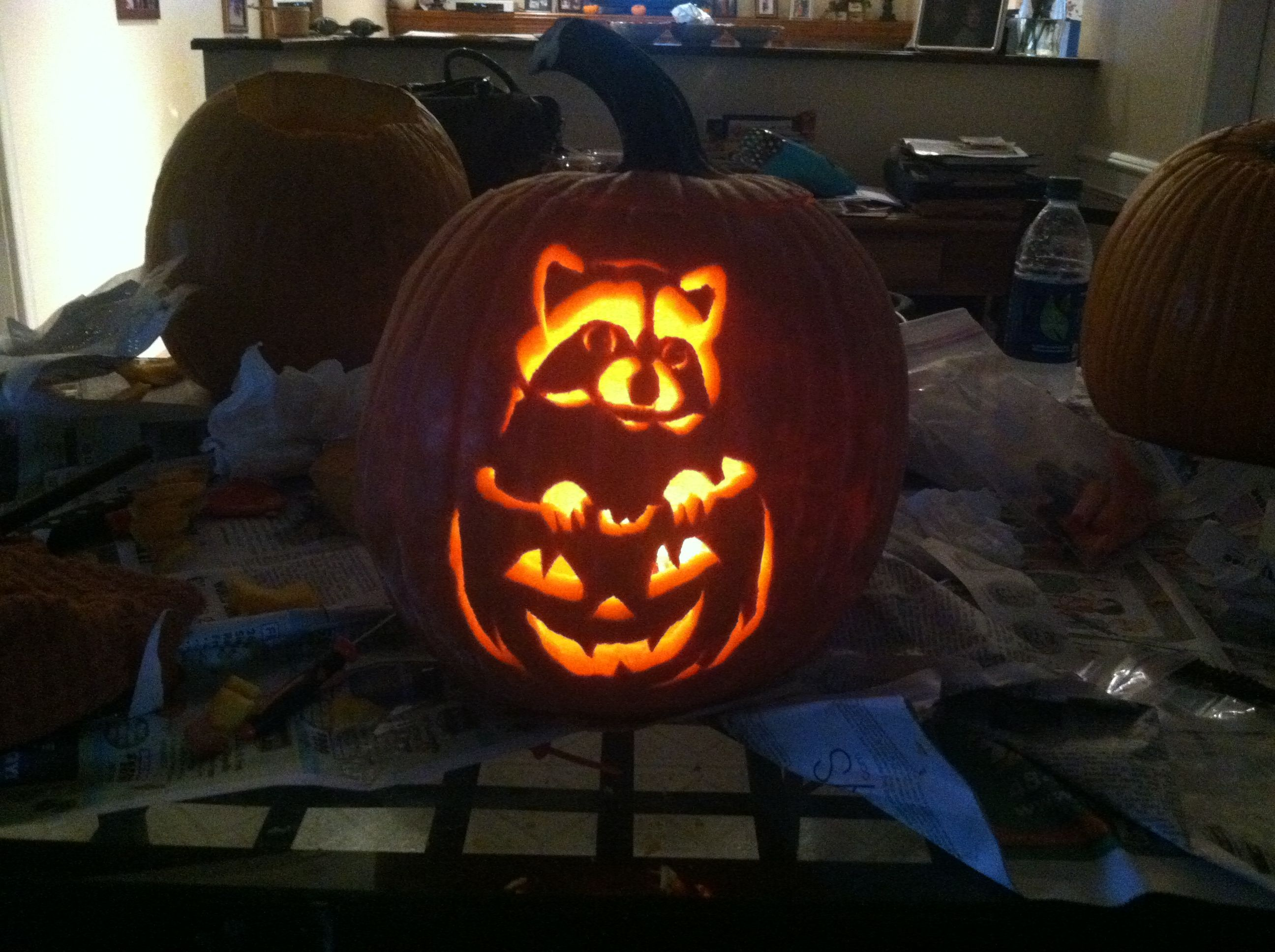Pumpkin carving raccoon in a little bit of