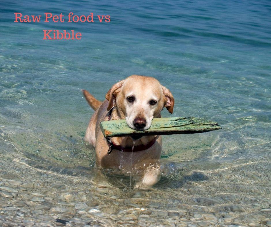 Raw food vs kibble dog beach dog friendly beach pet