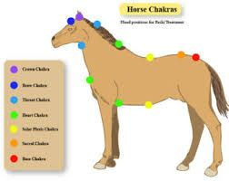 Image result for foal fetal positions