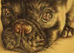 """""""Puppy Close Up"""" 5"""" x 7"""" Colored Pencil on Paper Artistry by Lisa Marie SOLD"""