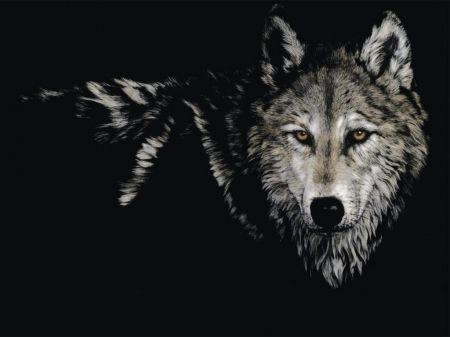 Wolf Art Beautiful Friendship Mythical Lone Wolf Wolf