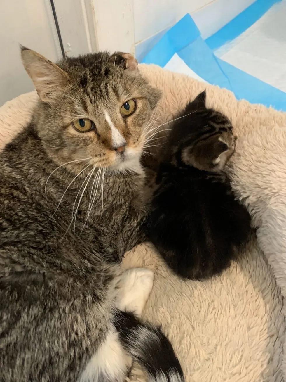 Little In 2020 Kitten Lover Cat Cuddle Kitten Rescue