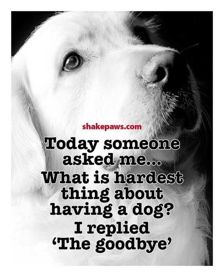 Pin By Theresa Koch Koch On Animal Friends Dog Quotes Pet Remembrance Dogs
