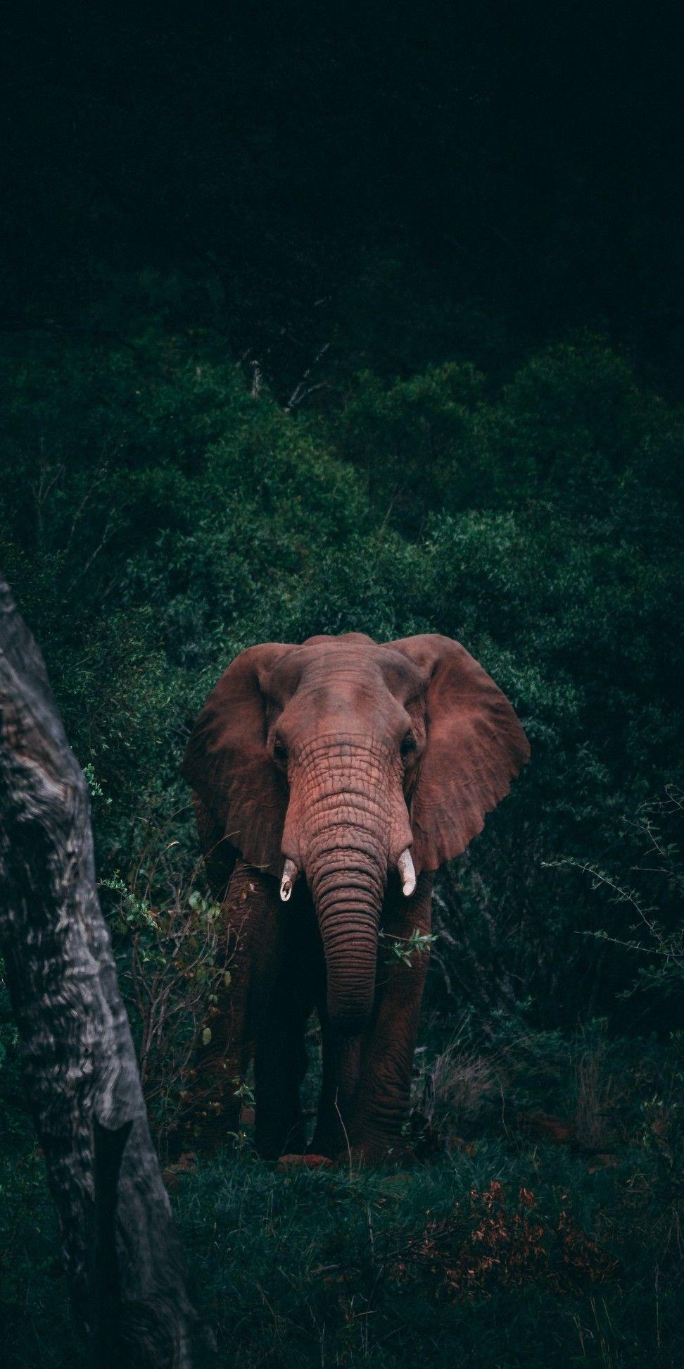 Beautiful Photo Elephants Photos Animals Beautiful Elephant Photography