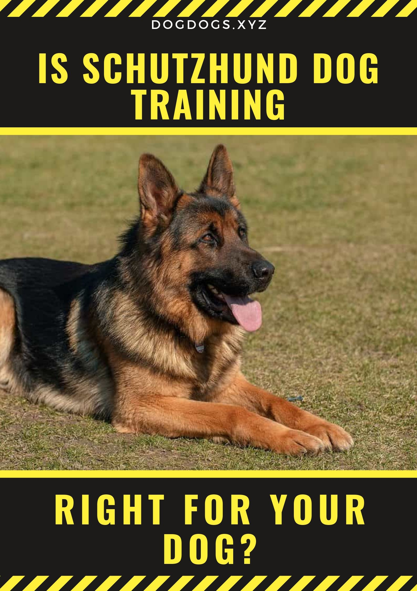 The Training Is Very Rigorous And While Many Dog Breeds Are