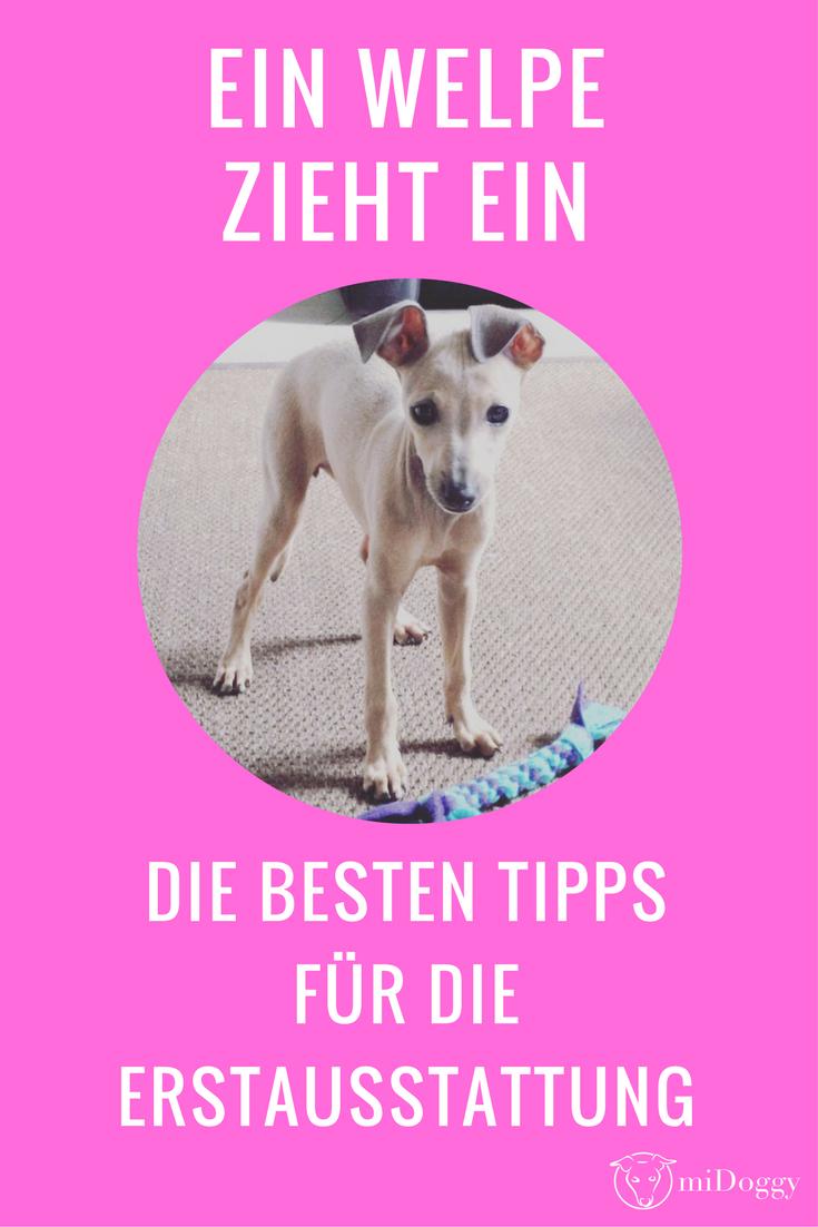 Ein Welpe Zieht Ein Tipps Fur Die Erstausstattung Midoggy Community Welpen Hundewelpen Welpenbilder