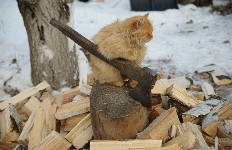(+1) Хозяйственные коты