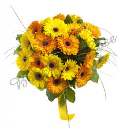 Bunch Of 20 Yellow Orange Gerbera Yellow Orangegerbera Gerbera Bouquet Gerbera Flower Delivery