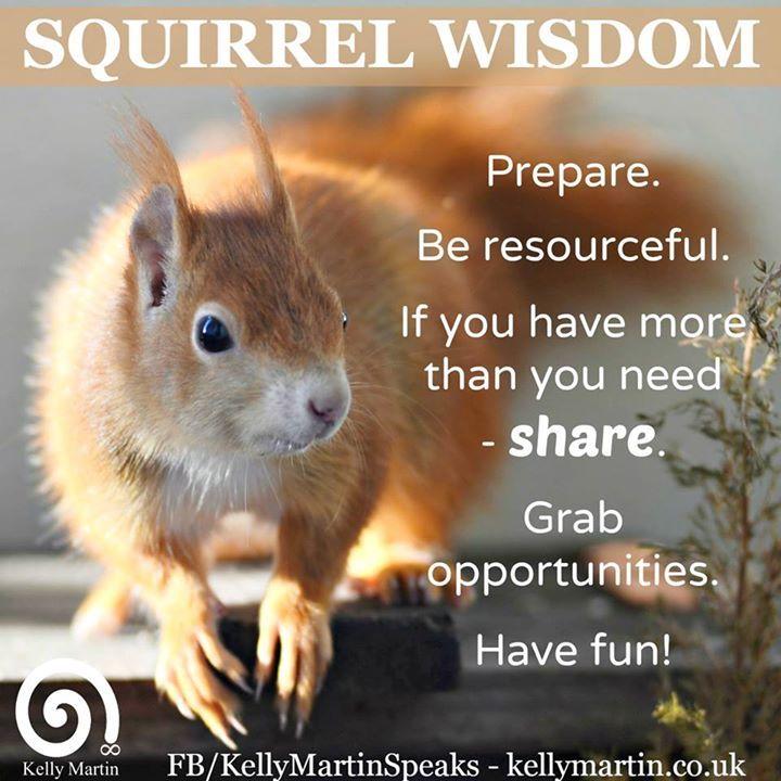 Squirrel wisdom quote shamanism squirrel Squirrel
