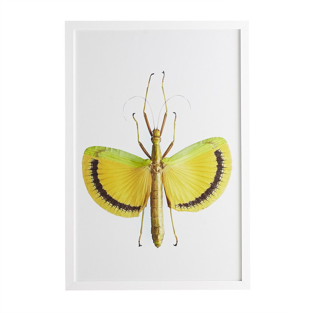 Stick Insect Wall Art – Yellow Umbrella | Yellow umbrella, Walls and ...
