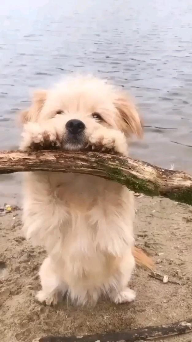 lovely dog