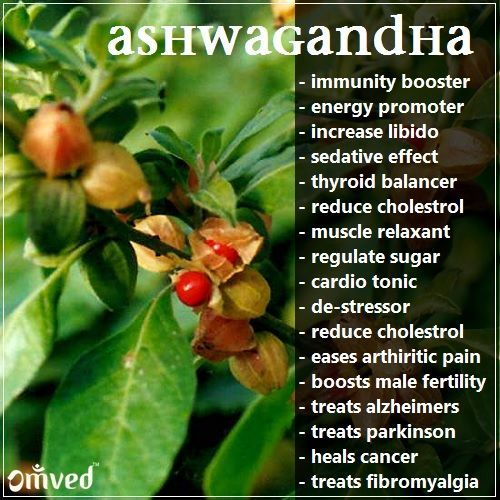 Is Ashwagandha Of The What Benefit